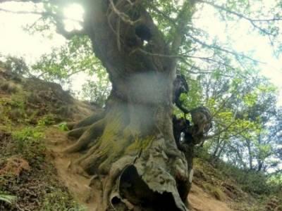 Sierra del Caurel:Courel; Lugo_Galicia; grupo amigos madrid senderismo a tu aire viajes fines de sem